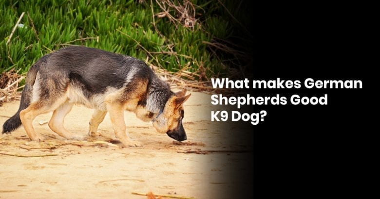 What Makes German Shepherds Good K9 Dog?