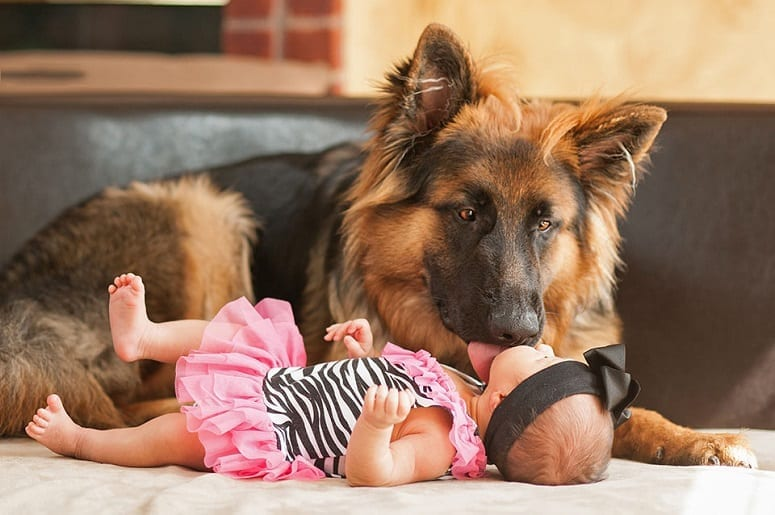 German Shepherd And Baby