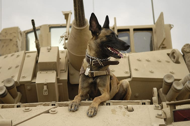 dogs usage in the military