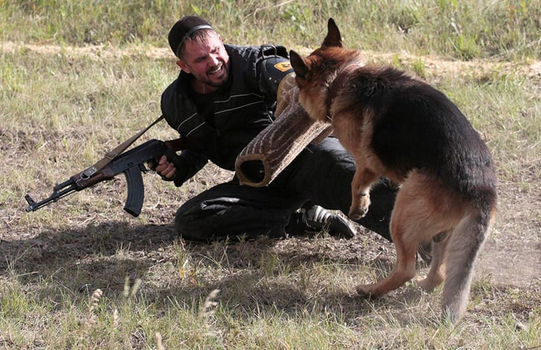 myth german shephards attack owners