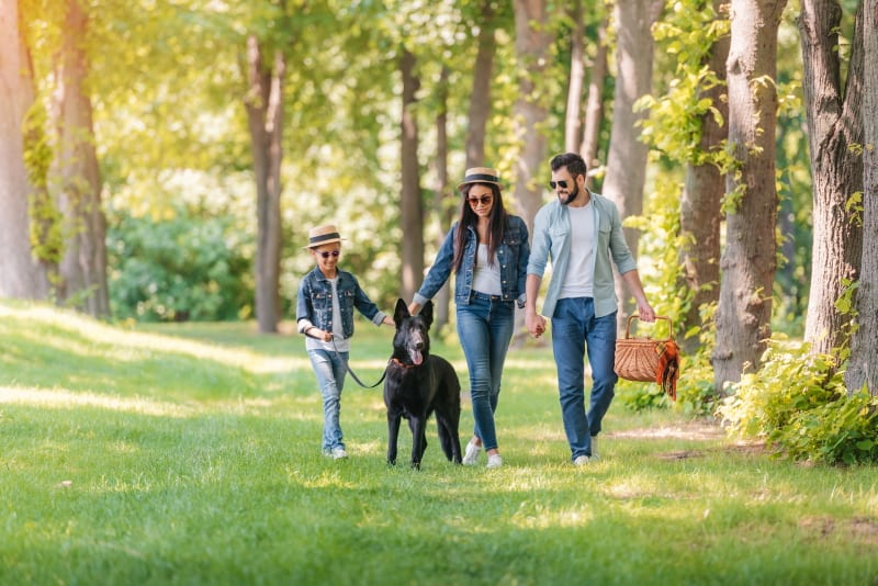 A young family with a child, walking their black GSD