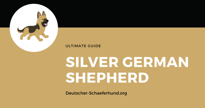 Sliver German Shepherd
